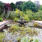 Lily and fish pond