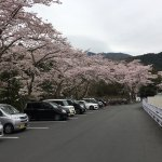 Photo of Tsubaki Ogamiyashiro Shrine