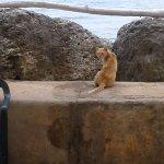 Kittie by the sea