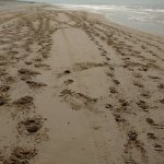 nothing but horse prints on the beach