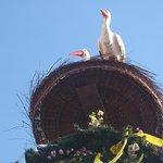 Avian motif