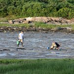 """Digging near the """"Kelp Shed,"""" Hermit Island Campground"""