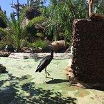Photo de Cocodrilo Park zoo