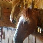 Mountain Horse Farm B&B and Wellness Retreat Foto