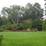 Inviting location for a picnic