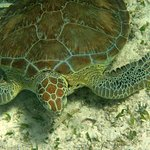 Our onsite 5-star PADI dive shop has daily dives to Mexico Rocks