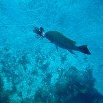 Grouper's lionfish snack - Palancar, January 2017