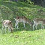 Photo of Parc de Merlet