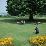 View from the table.. Lovely flower beds, the chinar trees of course and Dal Lake in the distanc