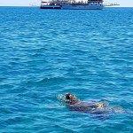 Photo of Marathonisi (Turtle Island)