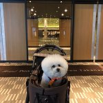 Photo de Grand Prince Hotel New Takanawa