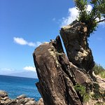 A tree growing out of a rock off Makalua-puna point