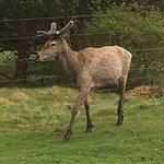 Foto di Highland Wildlife Park