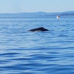 Foto di Prince of Whales Whale Watching