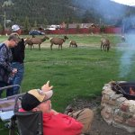 Fire pit and elk came to visit