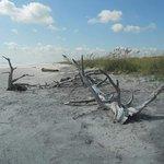 Little Talbot Island State Park صورة فوتوغرافية