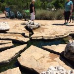 Foto de Lady Bird Johnson Wildflower Center
