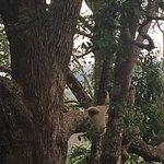Flight of the Gibbon Foto
