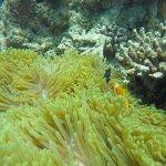 Photo of Conrad Maldives Rangali Island