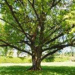 COLLEEN UNDER AMAZING 'GARRY OAK' TREE