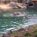 Dallas Zoo Foto