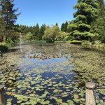 Photo of VanDusen Botanical Garden