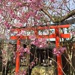صورة فوتوغرافية لـ Matsusho