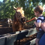 3yo feeding the horses