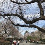 Foto de Central Park
