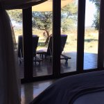 Foto de Madikwe Hills Private Game Lodge