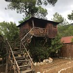 Photo of Jungle Bells Hostel
