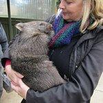 Cuddling a Wombat