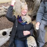 Playing with Meerkats