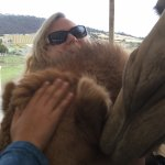 Getting a cuddle from the Camels
