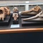Skull exhibit
