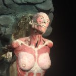 Photo de Body Worlds
