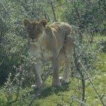 Photo of Etosha National Park