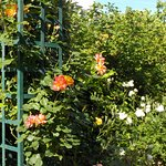 Promenade fleurie