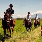 Ubud Horse Stables