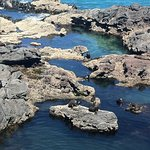 Seals in the water and on the rocks