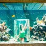 Foto de The Royal Sea Aquarium Resort