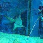 Photo of Beijing Aquarium (Beijing Haiyangguan)
