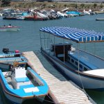 Daily Boat Cruises