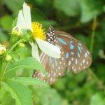 Photo of Kaeng Krachan National Park