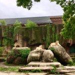 Foto di Lincoln Park Zoo