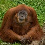 Memphis Zoo Foto