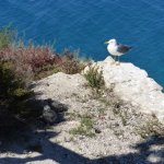 mummy gull and babies