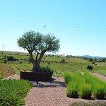One vista at the winery (Credit Daniel E.)