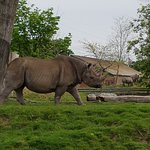 Photo of Chester Zoo