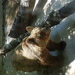 Photo de Parco Zoo Punta Verde